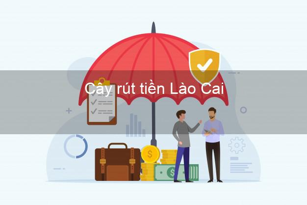 Cây rút tiền Lào Cai