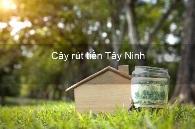 Cây rút tiền Tây Ninh