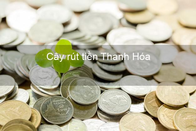 Cây rút tiền Thanh Hóa